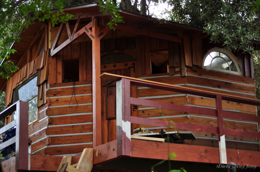 A Treehouse Grows in Sunland