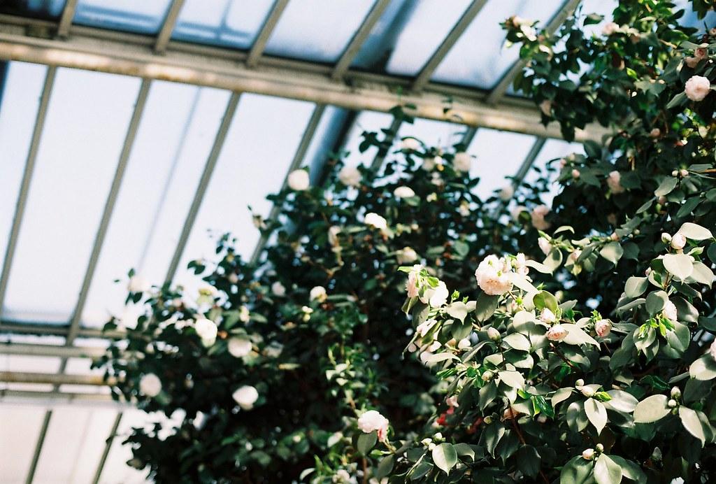 berlin botanic garden