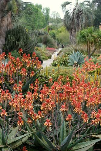 huntington aloes