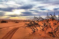 (Mohammed Almuzaini © محمد المزيني) Tags: xviewphotosfromyouorfromeveryoneالمزينيxviewphotosfromyouorfromeveryoneنفودxviewphotosfromyouorfromeveryoneالدهناءxviewphotosfromyouorfromeveryoneعبداللهxvi