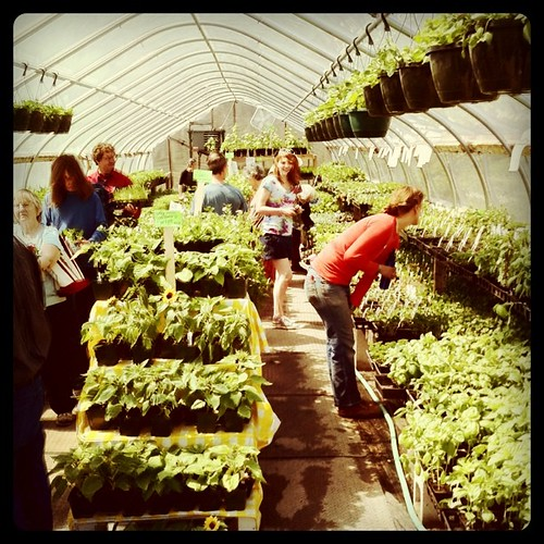 at Fedco, Checkerberry Farm seedlings