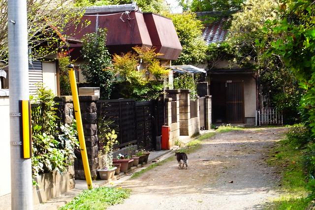 Today's Cat@2011-04-29