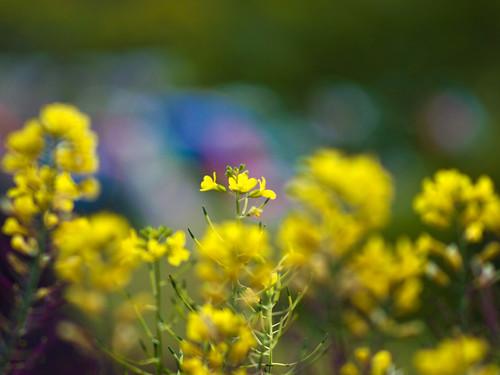 黄色の向こう