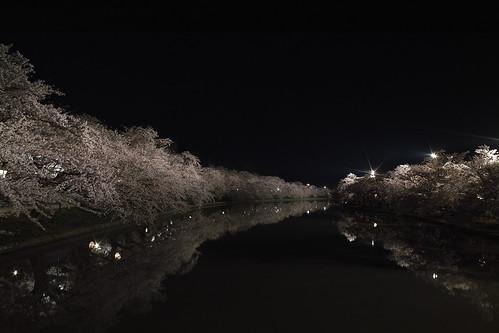 弘前 桜 西堀