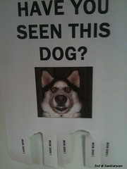 have you seen this dog (sanitaryum) Tags: funny lol humor rofl cleanhumor hilariousfunnylolhumorcleanhumorroflhilarious