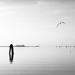 Venetian Lagoon (MaggyMorrissey) Tags: venice bird water island seagull lagoon venetian venezia burano briccole niksilverefexpro