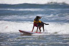 DogSurf_Loews2011_106