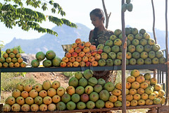 Layers of Mangoes (Light and Life -Murali முரளி) Tags: lady highway mango bunch layer mangoes img1135p1sc