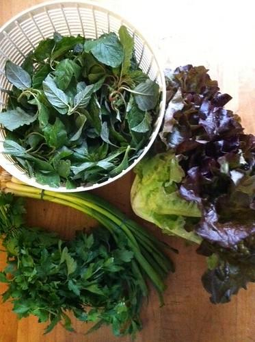 Greens - CSA 2011, Week 2