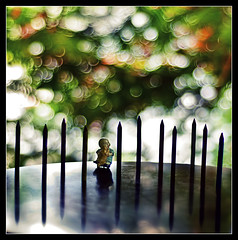 finally a fence on a friday.. (PNike (Prashanth Naik)) Tags: trees red india reflection green pencils fence experiments nikon bokeh hyderabad andhra andhrapradesh gulmohar hff bokehlicious d7000 happyfencefriday pnike