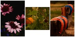Faces Of Fall (Chamblin1) Tags: autumn flowers horseshoes pumpkin chickenwire
