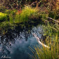 werdensteiner moos (Ronny Gbler) Tags: wasser schilf gras baum baumstamm grn rot gelb wolken spiegelung reflektion tmpel