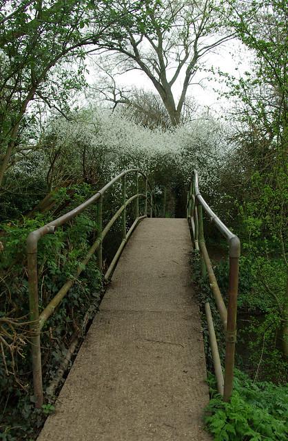 The White Bridge and White Arch