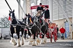 IMG_8831-2 (Tony Golding) Tags: horse canon shire breed heavy rare peterborough equine draft springshow drafthorse shirehorse 400d shirehorsespringshow shirehorsesociety tonygolding heavyhorsephotography shirehorsesocietyspringshowcollection forgetmenothere
