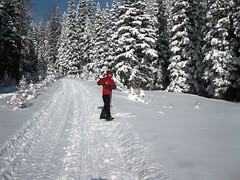 IMG_4775 (tertils) Tags: winter snow canada skiing zima xcountry xcountryskiing snieg