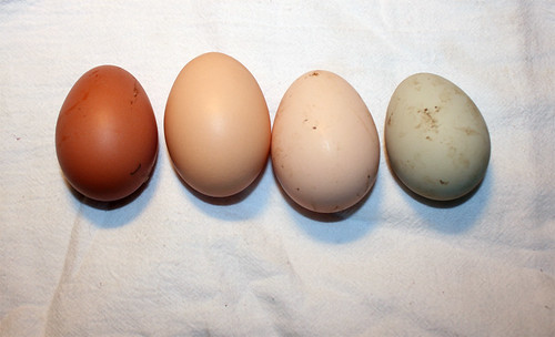 Four eggs laid in a row on a white sackcloth dish towel.  On the left is a dark reddish brown egg, next to the right is a medium-brown egg, next is a pale brown egg, and finally there is a green egg with a tint of blue.  The first and last eggs are slightly smaller than the two in the middle.