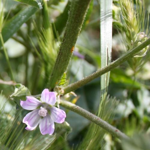 Eeeensy delicate wildflower