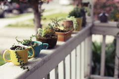 teacups (jasfitz) Tags: plants home gardening teacups frontporch succulents potting stringofpearls