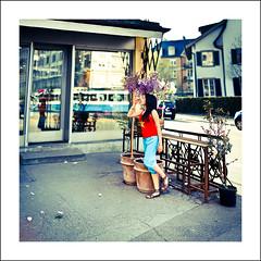 Smelling the wisteria (Christa (ch-cnb)) Tags: blue red panorama plants reflection window square switzerland bokeh zurich tram olympus pots florist zrich zuiko wisteria loan e5 zd50mm bokehrama brenizermethod