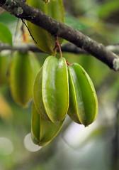 Zanzibar Fruit