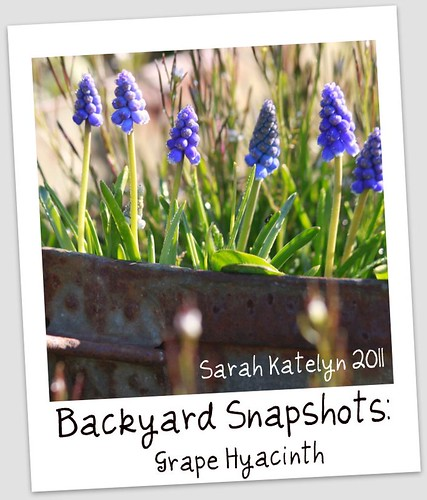 Backyard Snapshots: No. 3 by Sarah Katelyn Imagery
