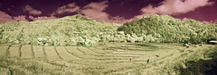Doi Inthanon Rice Paddy Panorama (aeschylus18917) Tags: panorama mountains nature clouds forest landscape ir thailand countryside nikon scenery d70 paddy nikond70 terrace terraces harvest surreal hills jungle thai infrared chiangmai agriculture ricepaddy pxt paddyfield 田んぼ doiinthanon 105mm tambo 105mmf28gfisheye เชียงใหม่ 赤外線 tanbo ราชอาณาจักรไทย maechaem ดอยอินทนนท์ chomthong nikkor105mmf28gfisheye ダニエル ratchaanachakthai จอมทอง danielruyle aeschylus18917 danruyle druyle ルール ダニエルルール แม่แจ่ม