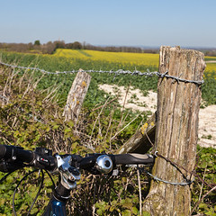 Fence Friday - Depth of yellow Field edition. (penwren) Tags: england field bike fence sussex wire post country rape cycle barbedwire april bikeride southdowns alfriston canola hedgerow woodenpost oldcoachroad fencefriday firlealfriston