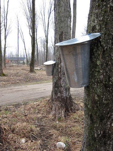 Elmvale Maple Syrup Festival