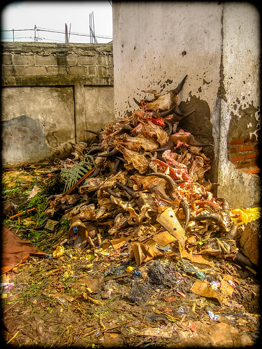 Skulls:  Ende, Lombok