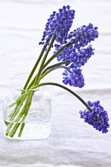 Muscari and the Will