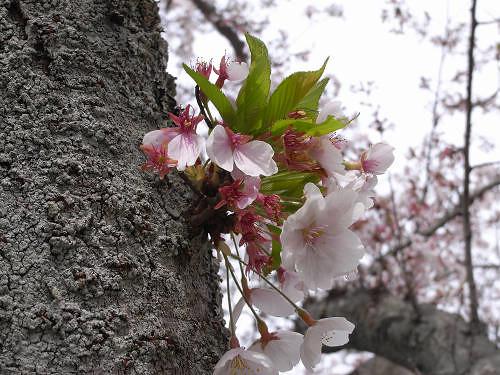 春の花々@明日香村-01