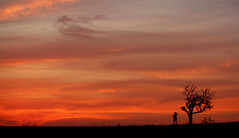three (ssj_george) Tags: sunset sky people orange man tree nature field hat bike bicycle silhouette clouds standing canon lens landscape outdoors person eos rebel is cowboy sundown strokes bare silhouettes cyprus saltlake fields parked xs