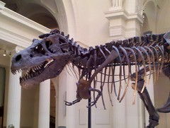 Sue the T. Rex at the Field Museum