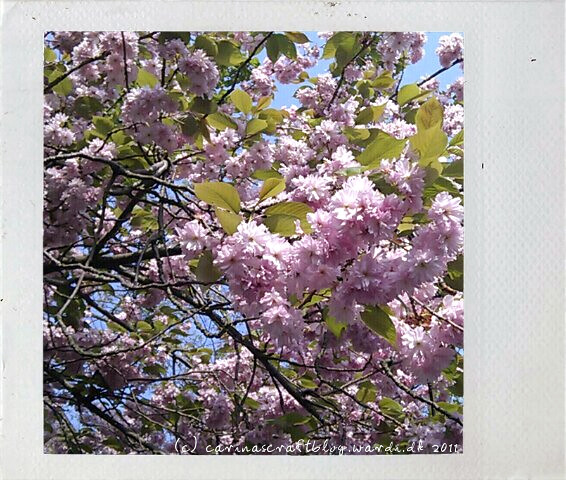 Tree in spring pink