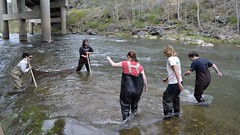 _ADC0797_cr (candlelightbomb) Tags: fish seine river nc fishing rocks boots asheville rubber fishes waders wading unca wnc seining catchingfish uncasheville kicknet seinefishing biologyoffishes