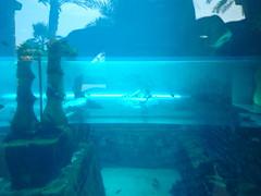 Shark Ride, Atlantis Palm, Dubai (helentravelling) Tags: travel fish hot water aquarium hotel dubai jellyfish nemo desert cloudy uae middleeast sunny arabic arab souk waterslide unitedarabemirates travelblog humid aquaventure tumblr atlantispalm