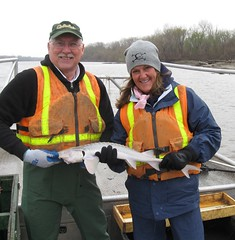 Pallid Sturgeon Broodstock Sampling