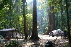 Forest camp - Mt. Mabu, Mozambique