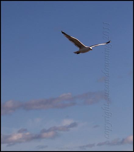 J. L. Seagull