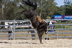 IMG_8768 (indy turtle) Tags: horse brisbanemeetup daybororodeo