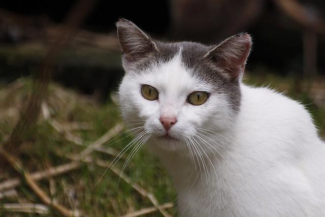 fudge mill kitty5