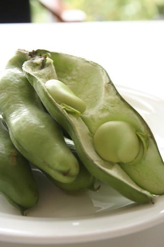 potager NAKANOのそら豆