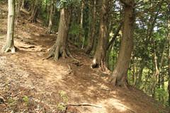 杉の林の登り道