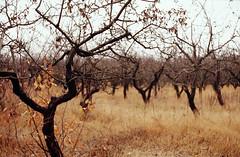 Good night, see you in spring (S.Klyuchnikov) Tags: autumn tree apple garden kodak 400 zenit ultra 12xp