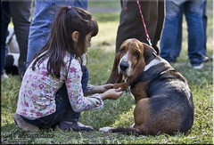 Friendly conversation (Nstor Pugliese) Tags: dog argentina miguel san hound perro basset tucumn