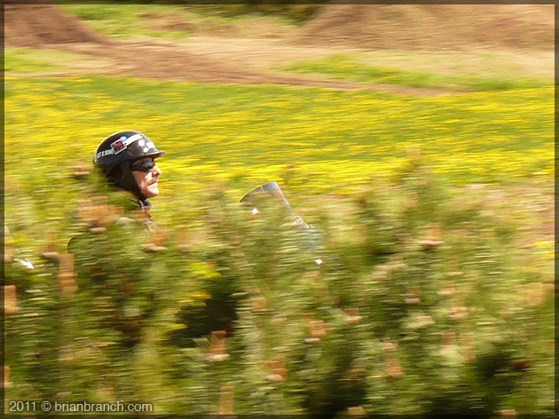 P1150297_biker_dandelions