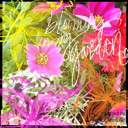 blooming in my garden