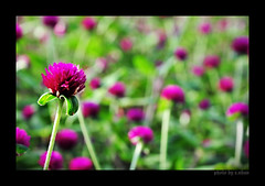 For You #2 (e.nhan) Tags: flowers light flower art nature closeup colorful colours shadows dof bokeh arts backlighting enhan