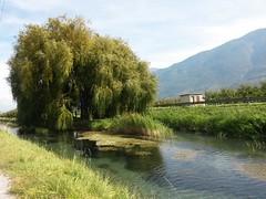 056 (valrando) Tags: branson pont du rhne vers leglise fully saillon chemin vignoble