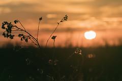347 (Rafi Moreno) Tags: sunset amanecer orange rafi canon sun proyecto365fotos 365proyect nature naturaleza paisaje landscape tablasdedaimiel ciudadreal